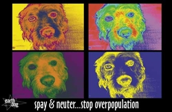 Murry Poster (Spay & Neuter)