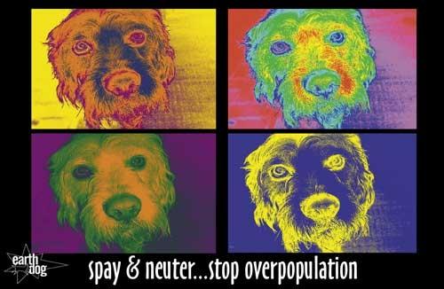Murry Poster (Spay & Neuter)