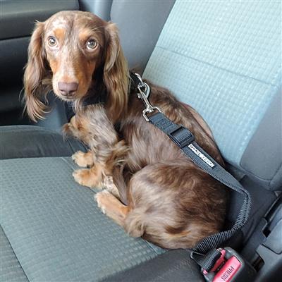 Seat Belt Strap Dog Car Leash