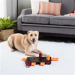 Move 2 Win  Dog Activity  (LEVEL 3) .