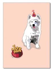 Birthday:  Samoyed