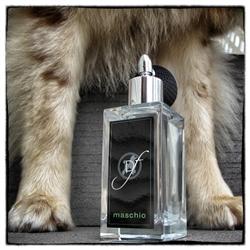 Male Dog Fragrance Maschio by Dog Fashion Spa