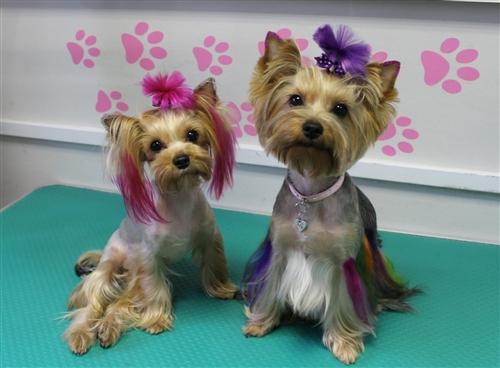 Pink Permanent Pet Hair Dye by Crazy Liberty