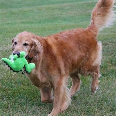 Tender-Tuffs Dino - Little Green Dino