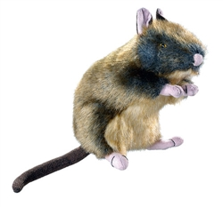 Wildlife Rat by HUNTER