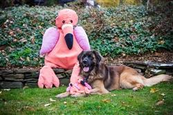 Plush Durable Corduroy Flamingo Knottie