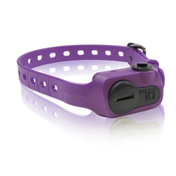iQ No Bark Collar - Purple