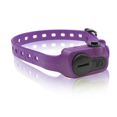 iQ No Bark Collar - Purple