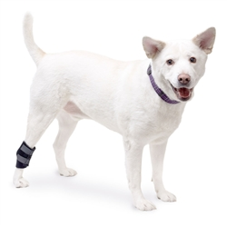 Walkin' Hock Wrap for Dogs Rear Leg Canine