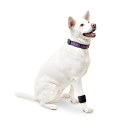 Dog Wrist Wrap