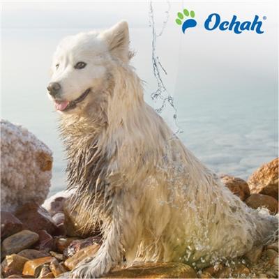 Protein - Mineral Dog Shampoo with Dead Sea Minerals & Aloe Vera - Gallon Jugs for Groomers