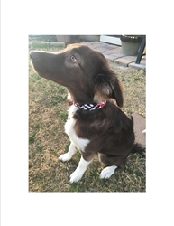Canine Cravat Party Dog Collars July 4 Patriotic Stars & Stripes 4 Size Strip Clip of 12 ON SALE!