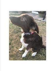 Canine Cravat Party Dog Collars July 4 Patriotic Stars & Stripes 4 Size Strip Clip of 12 ON SALE!