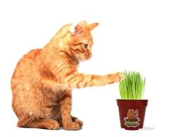 """Vermont Cat Grass 4"""" Grow Kit"""