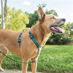 PetSafe® 3 in 1 Harness