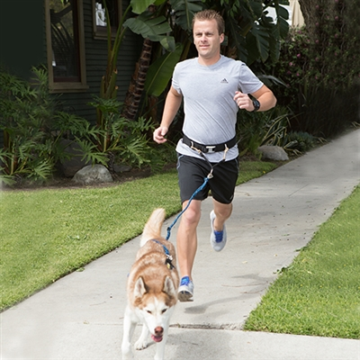 Urban Trail® Jogger's Leash w/Traffic Handle, Shock Absorber, Reflective