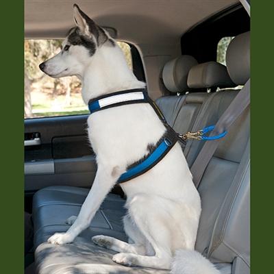 Safety First Seat Belt Restraint™