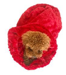 Cozy, Bella Red