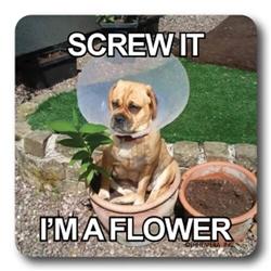 Screw It I'm a Flower Coaster
