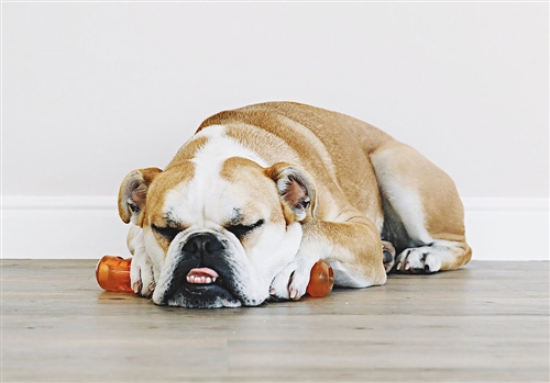 Bionic Urban Stick Dog Toy
