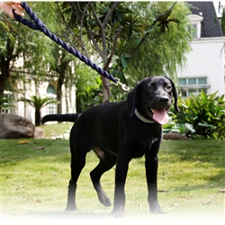 Tough-Tugger Industrial-Strength Shock Absorpting Woven Dog Leash