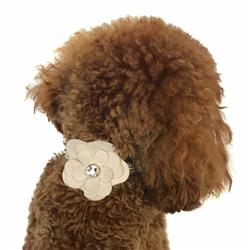 Blush Dog Collar Flower Slider