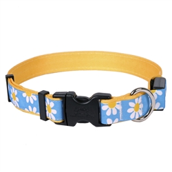 Blue Daisy on Solid Goldenrod ORION LED Dog Collar