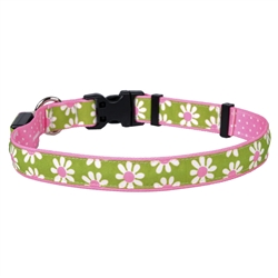 Green Daisy on Old Pink Polka Dot ORION LED Dog Collar