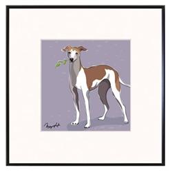 Framed Print: Italian Greyhound