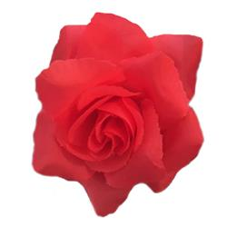 Rose Flower Bud Red by Huxley & Kent