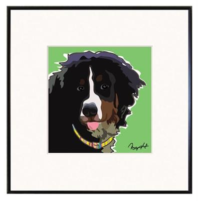 Framed Print: Bernese Mountain Dog