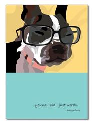 Birthday:  Boston Terrier