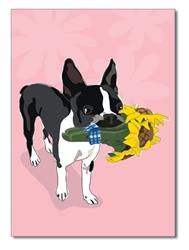 Thank You:  Boston Terrier