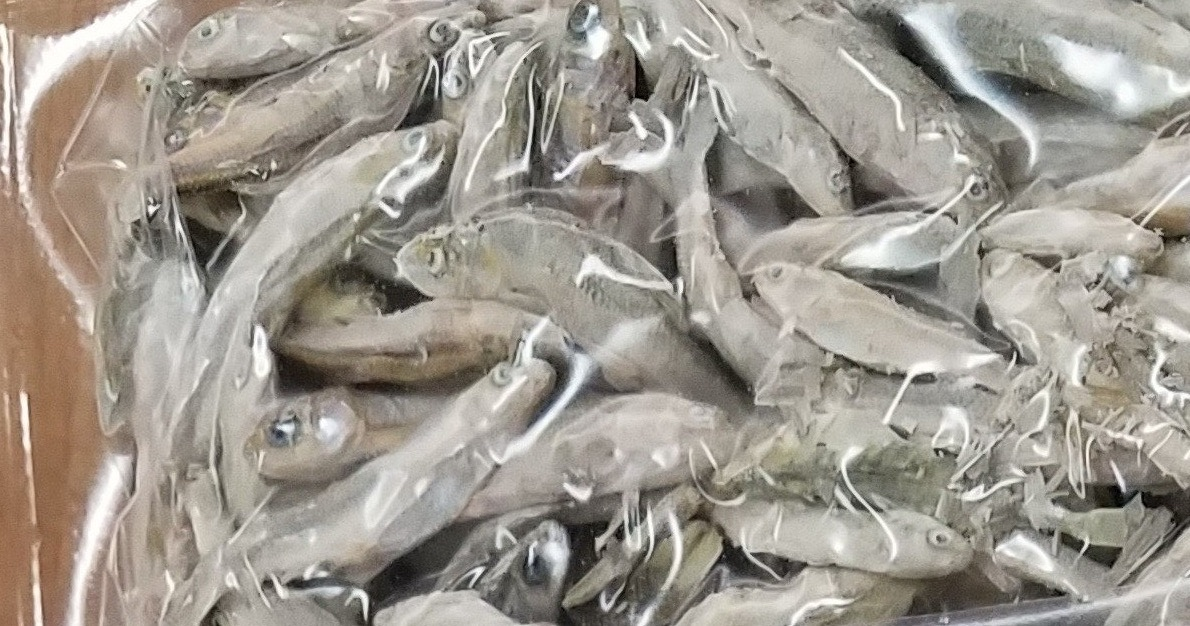 Freeze Dried Minnows BULK