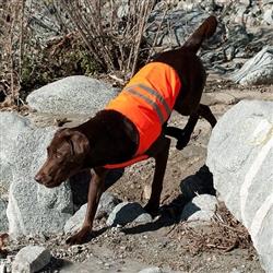 Orange Cooling Safety Vests
