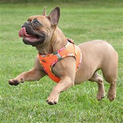 Hawaiian American River Choke Free Harness
