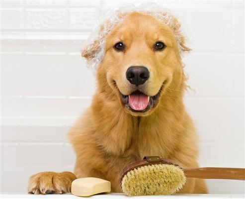 Espree Simple Shed Shampoo, 1 Gallon