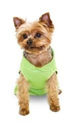 ULTRA PAWS ULTRA COOL TEE LIME (7 SIZES) KEEP YOUR DOG COOL ALL SUMMER LONG!