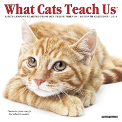 What Cats Teach Us 2019 Mini Calendar