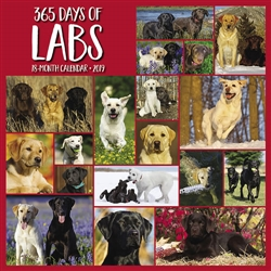 365 Days of Labs 2019 Wall Calendar