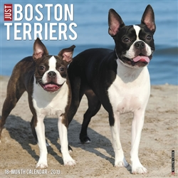 Boston Terriers 2019 Wall Calendar
