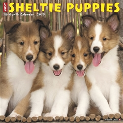 Sheltie Puppies 2019 Wall Calendar