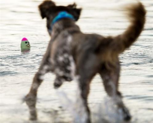 The Seals Lieutenant Flipper