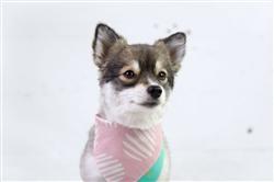 Reversible Dog Bandana w/ Magnetic Clasp - Pinksand