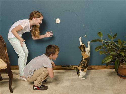 Cat Dancer Deluxe