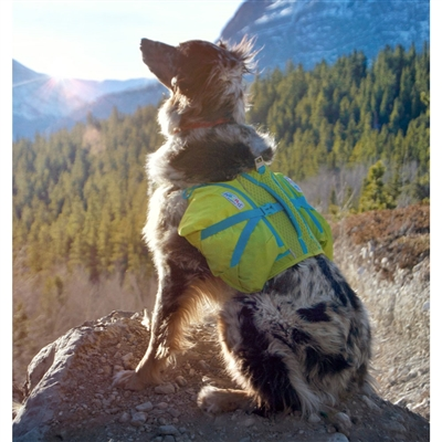 Crest Stone Explore Dog Backpack Hiking Gear For Dogs