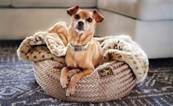 Luca Plush Nests Bed - Swirl