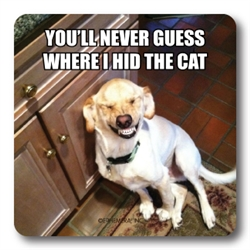 Hid The Cat Coaster