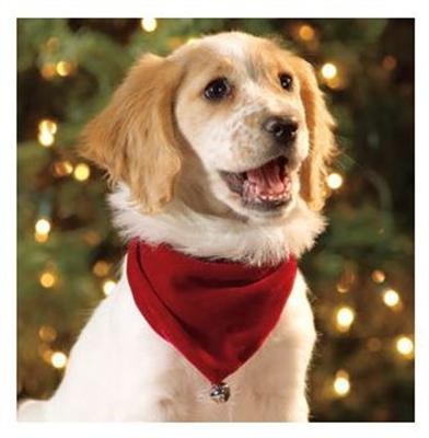 Outward Hound Kyjen Santa Bandanna for Dogs