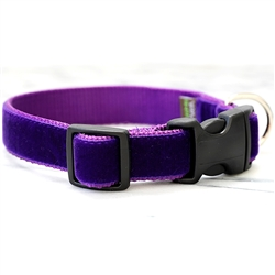 'Prince' Purple Velvet Collars & Leashes